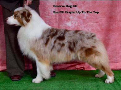reserve-dog-cc-rus-ch-fraytal-up-to-th