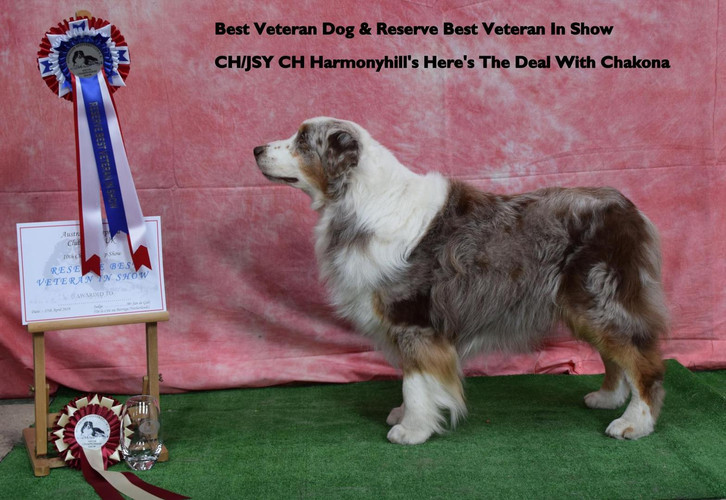 Reserve Best Veteran in Show and Best Veteran Dog