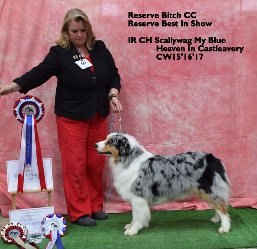 Reserve Best in Show and RBCC