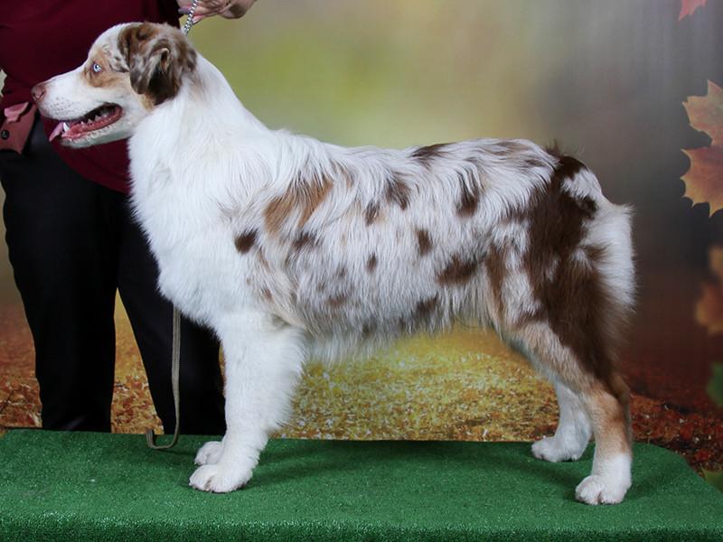 1st Minor Puppy Dog