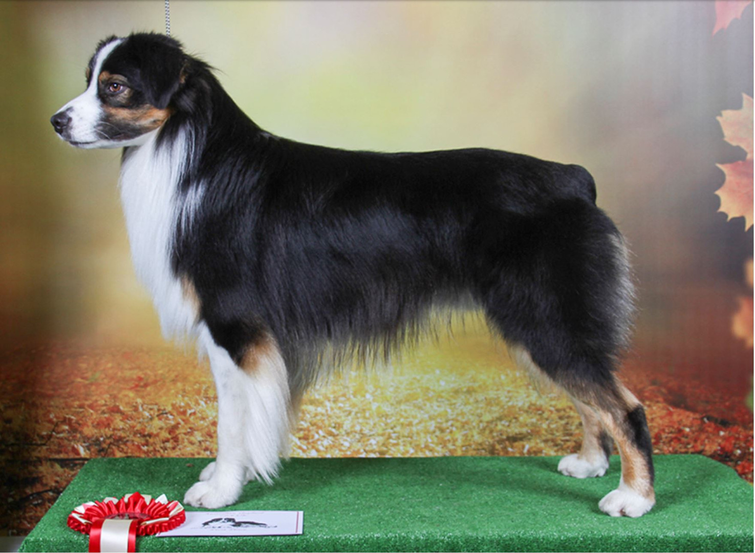 1st Yearling Dog