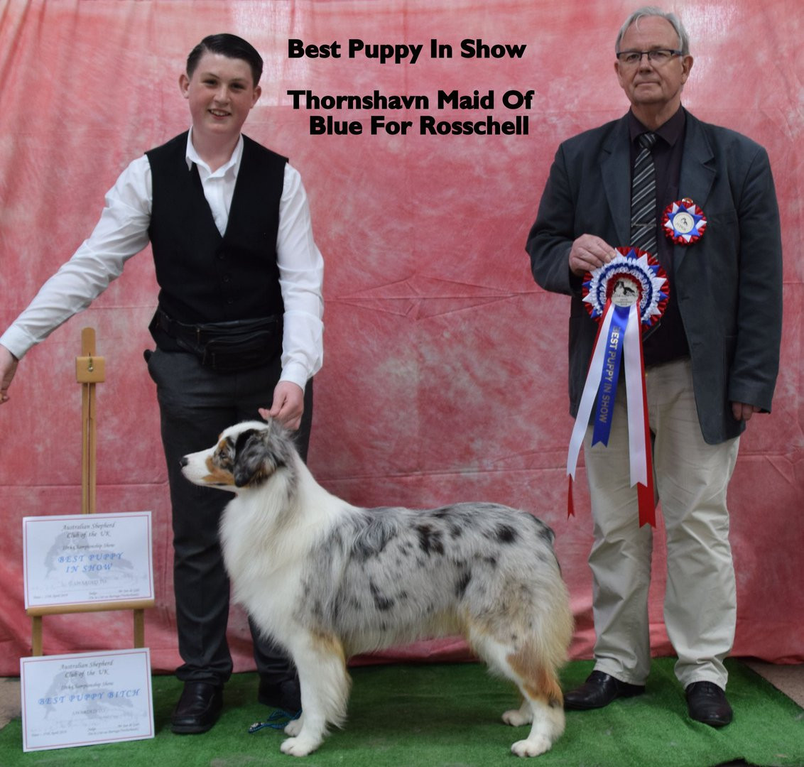 Best Puppy in Show