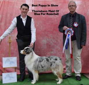 best-puppy-in-show-thornshavn-maid-of