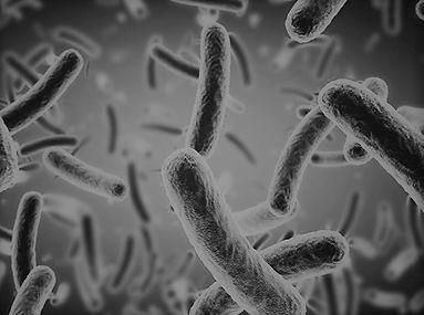 bacteria1.jpg