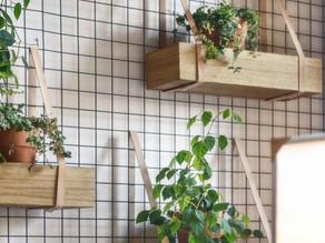 Débuter la permaculture en appartement