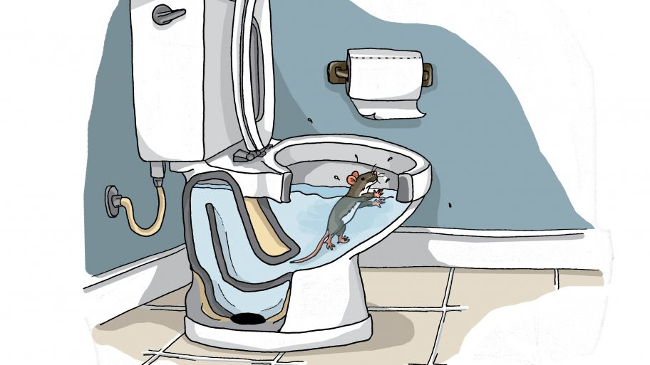 Rats in your toilet???
