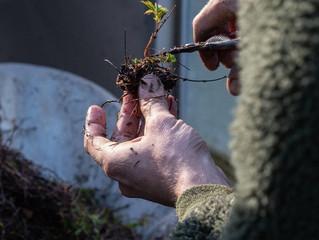 Jardiner avec les astres