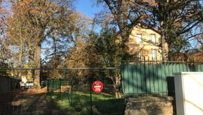 Des arbres centenaires en danger autour du rond point de la Chasse - La Mairie de Beauchamp accepte