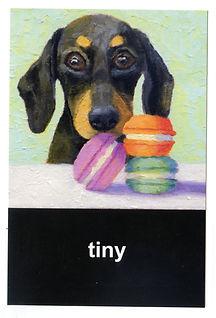 Tiny_front.jpg