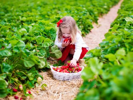 Das neue Erdbeer-Programm!