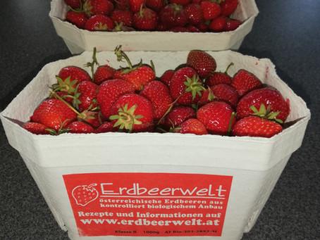 Die Erdbeer-Saison geht auch nun für Kindergärten und Schulen bei uns zu Ende..