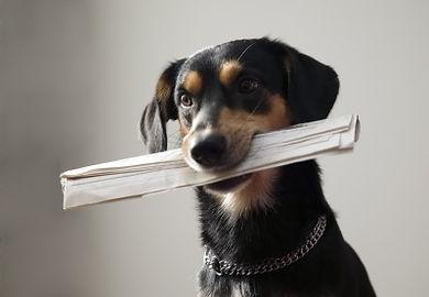 Trained Dog Delivering Paper