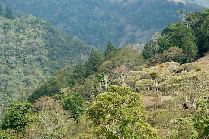 Chakra CR Trail20.jpg