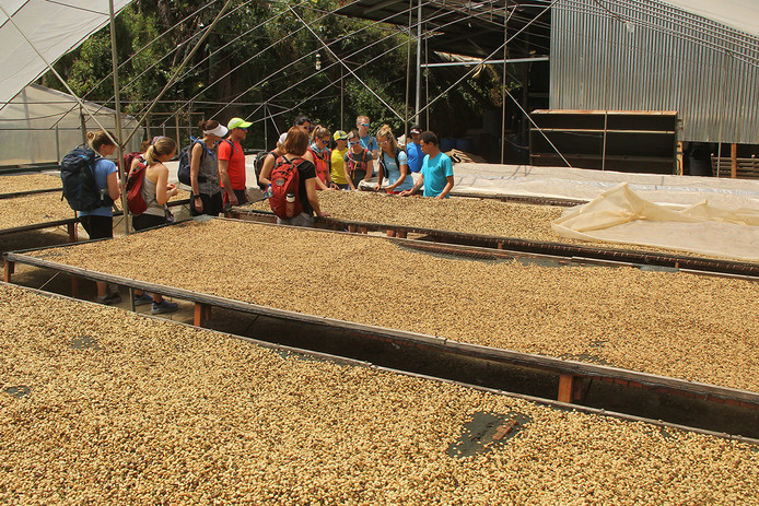 Chakra CR coffee tour02.jpg