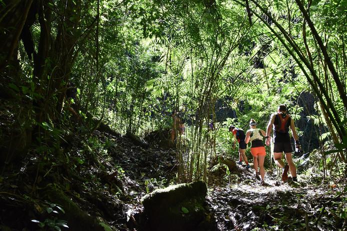 Chakra CR Trail19.JPG