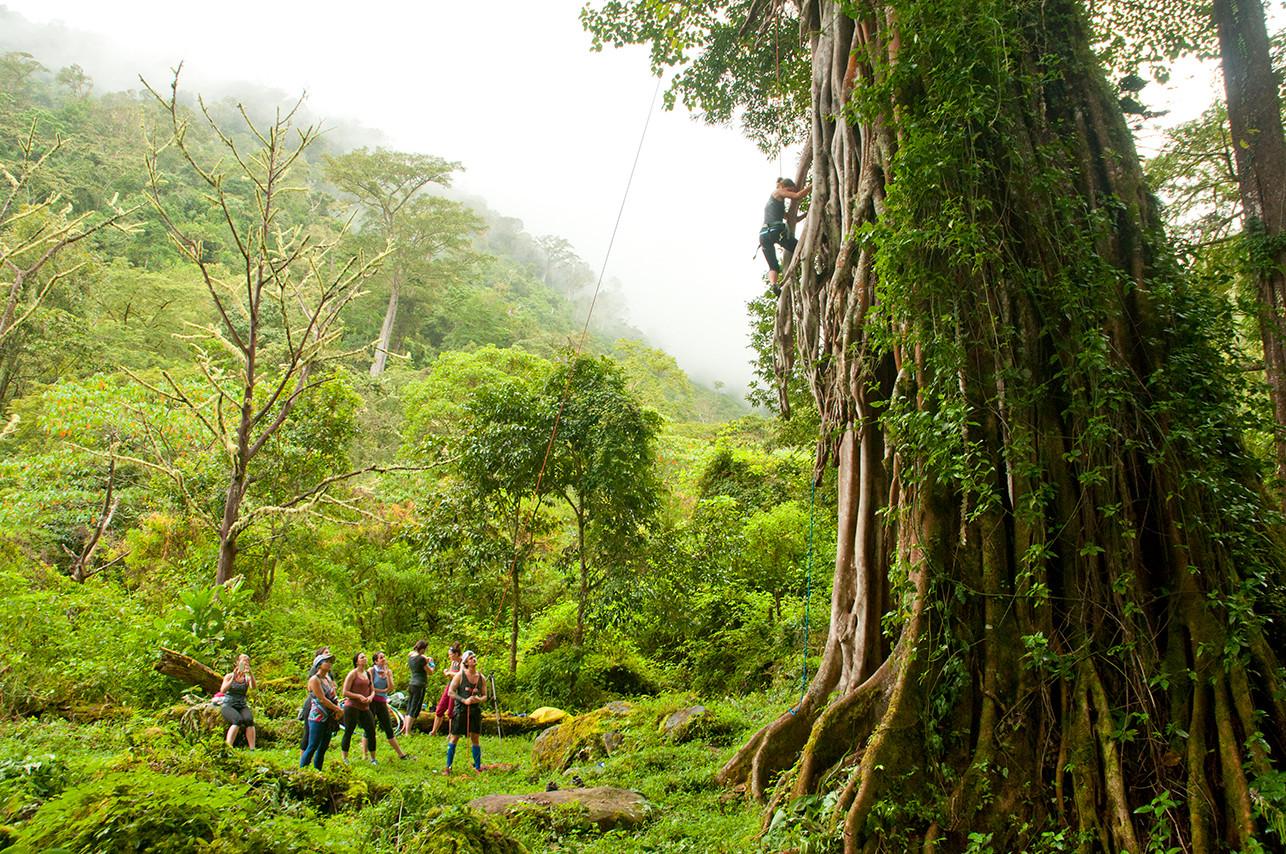 Chakra CR tree climb04.jpg