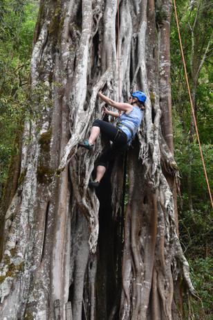 Chakra CR tree climb01.JPG