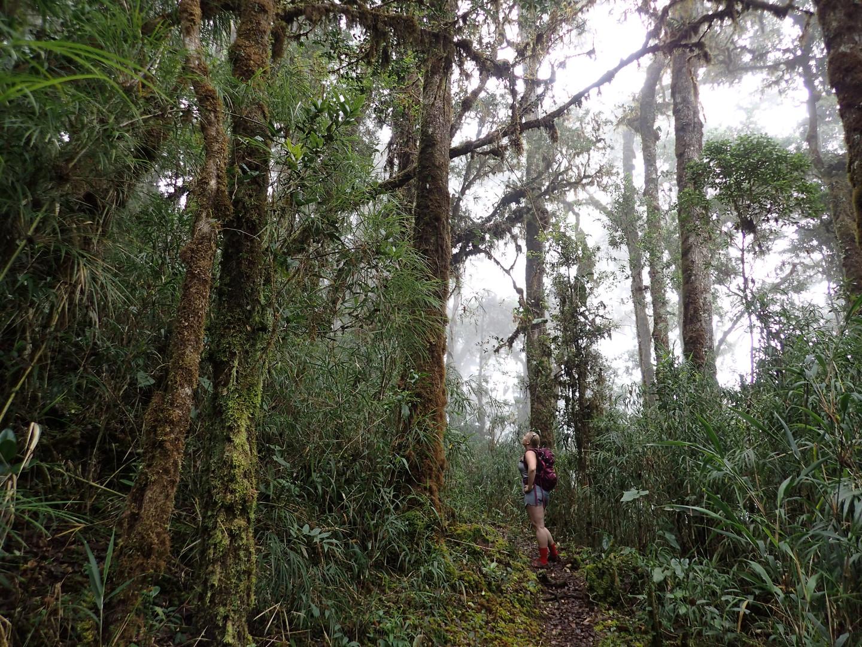 Chakra CR Trail26.JPG