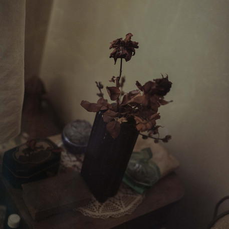 Dead flowers in my grandfather's flat in Žilina, central Slovakia. Everything in the flat has remained exactly the same for 30 years, since his mother, my great-grandmother had passed away.