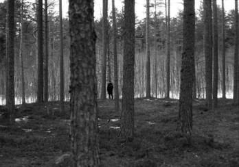 Forest walks in Estonia
