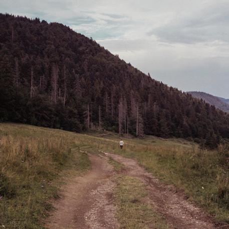 A walk through the hinterland