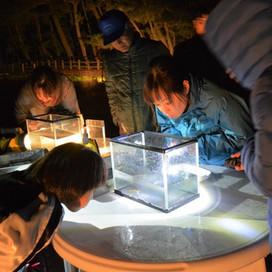 真夜中のランデブー ~ゴカイの生殖行動   観察会~ NPO法人くすの木自然館