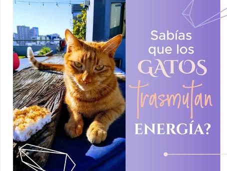 ¿Sabías que los gatos transmutan energía?