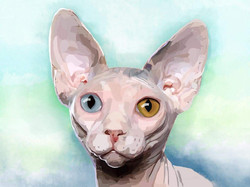 Sphynx