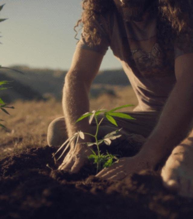 "NorCal Cannabis ""Heritage"""