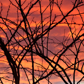 Sunset between branches - Sky Serenades in G