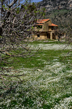 Spring and abandoned house in Jezzine, L