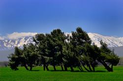 Bekaa Valley, Lebanon_0176