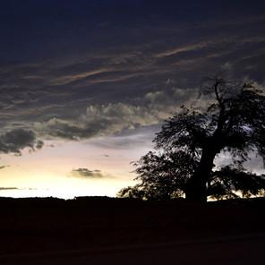 Lone Tree  - Sky Serenades in G