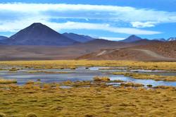 Swamp in the Atacama desert of Chile