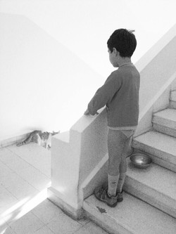 Cat, Lalo and light