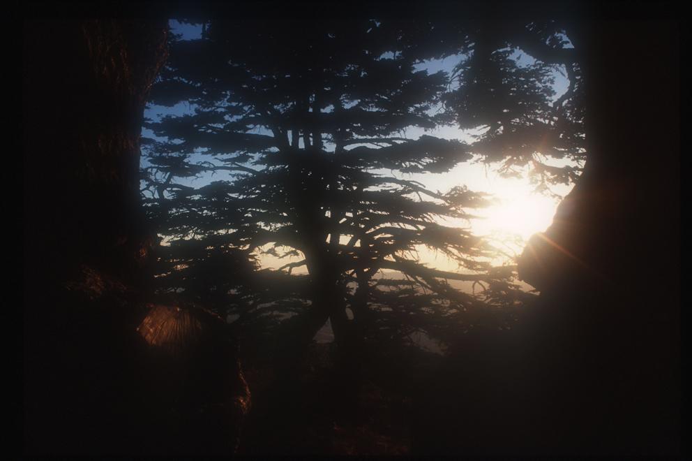 The Cedars at dusk 1 - Lebanon
