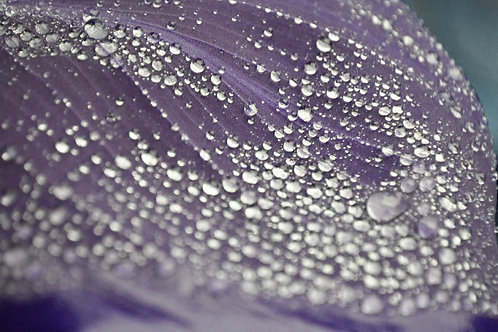 """Purple Dew"" print"