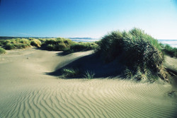 Dunes on a beach in Chiloe National Park, Chiloe Island, South Chile