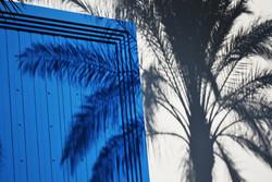 Shadow of palm tree Batroon Lebanon