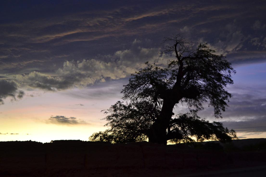 Atacama desert Tree and Sky