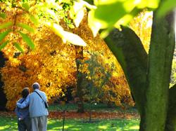 Couple admiring autumn at Kew - IMG_1366