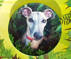 Pet photo plate