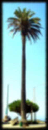 Stan Laurel,Oliver Hardy, Frédérique Broussolle,photgraphe,Los Angeles,palmier,2012