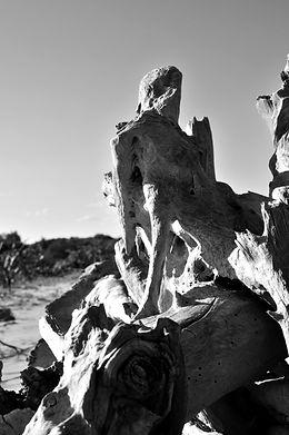 Wooden Man-Camargue, France/2012-copyright Frédérique Broussolle