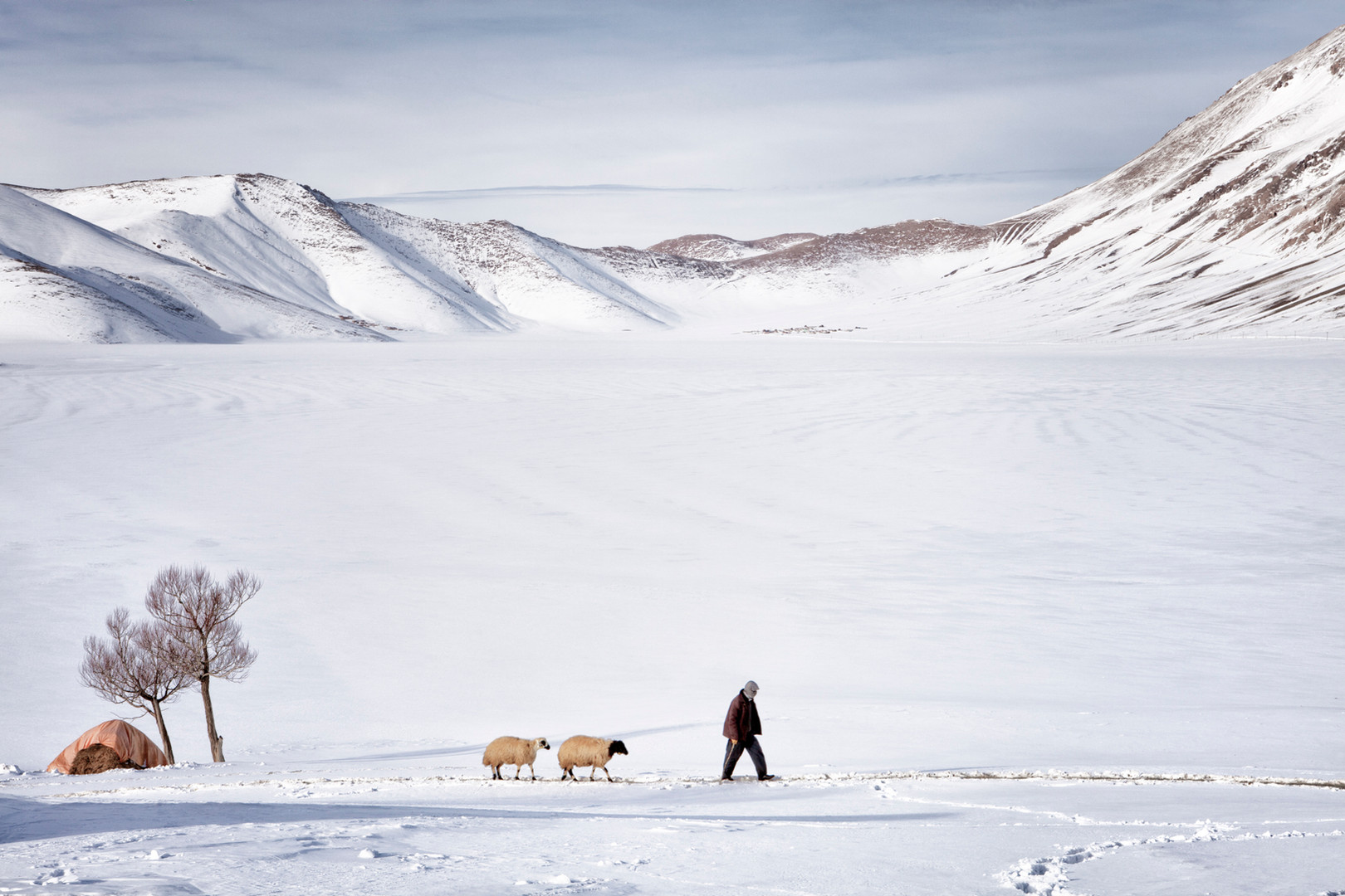 A man takes the sheep to the barn. Uzuntekne, Van. January 2013.