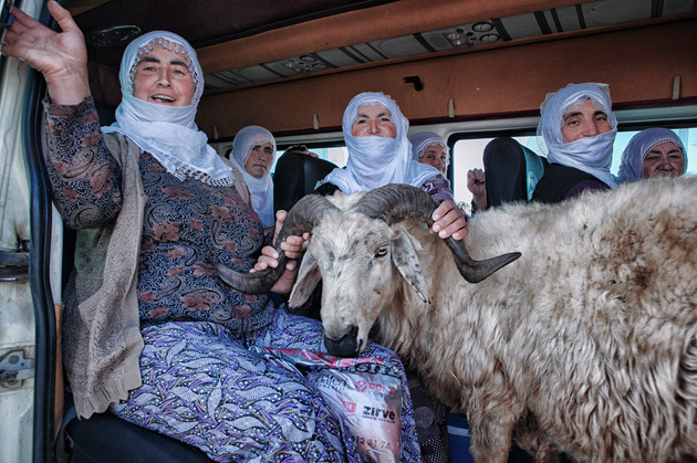 Women separate the ram from the herd because he get sick. They take him to the village for treatment. Van, Turkey. July 2013.