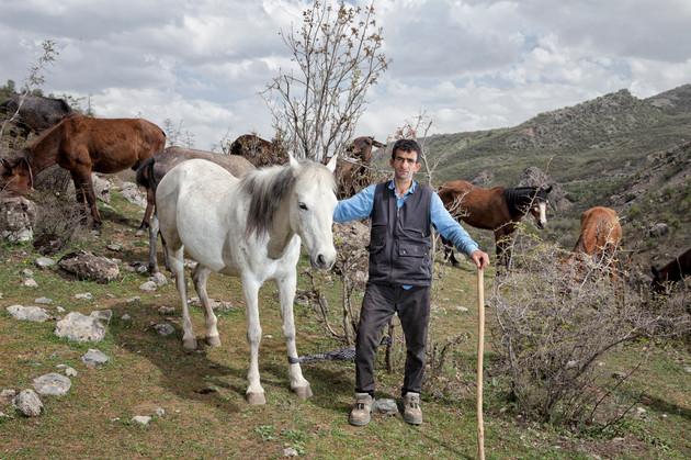 shepherd of horses-2.jpg