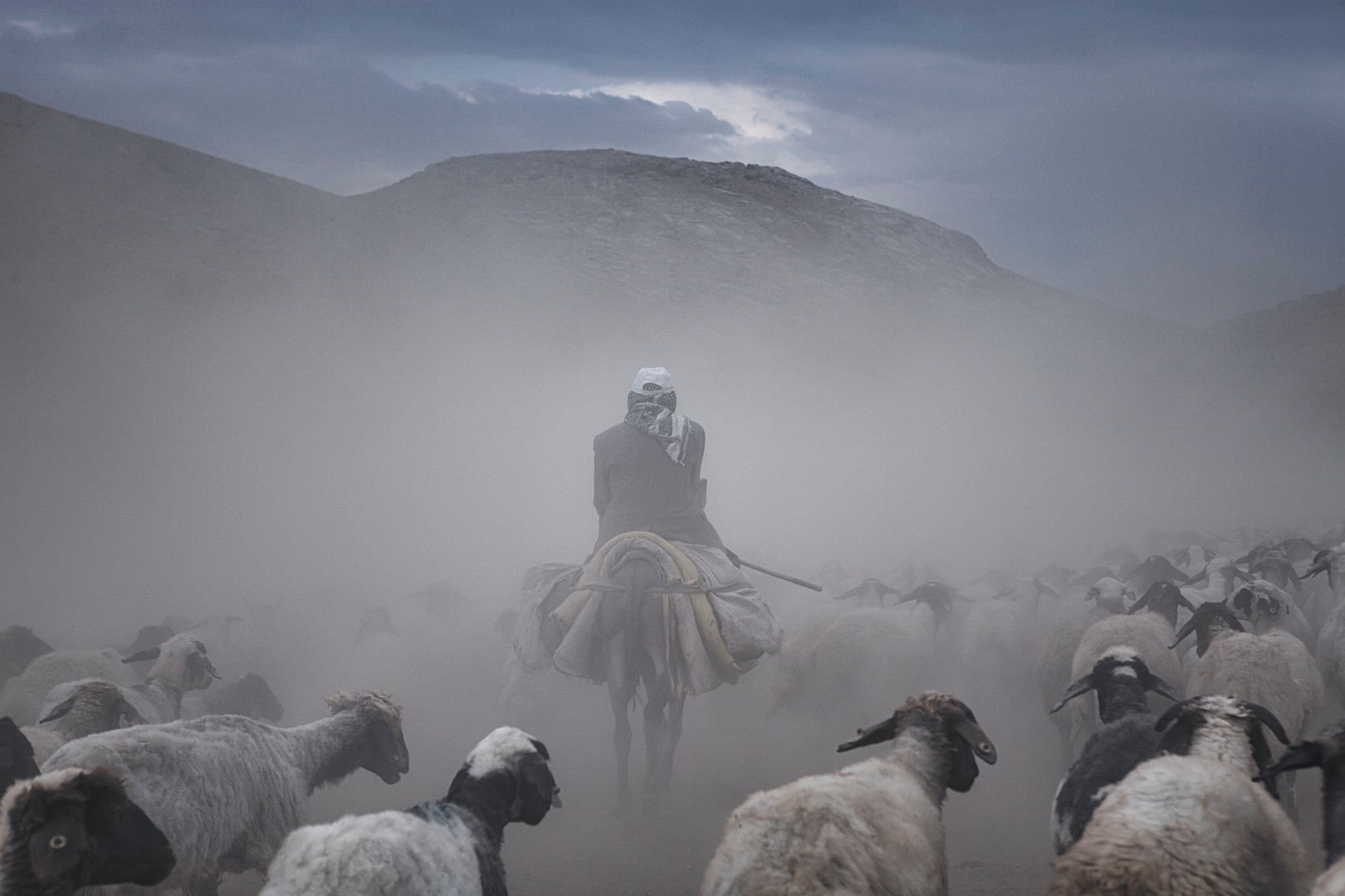 The shepherd and his herd try to move in a dense dust. Alacayar, Van. August 2017.