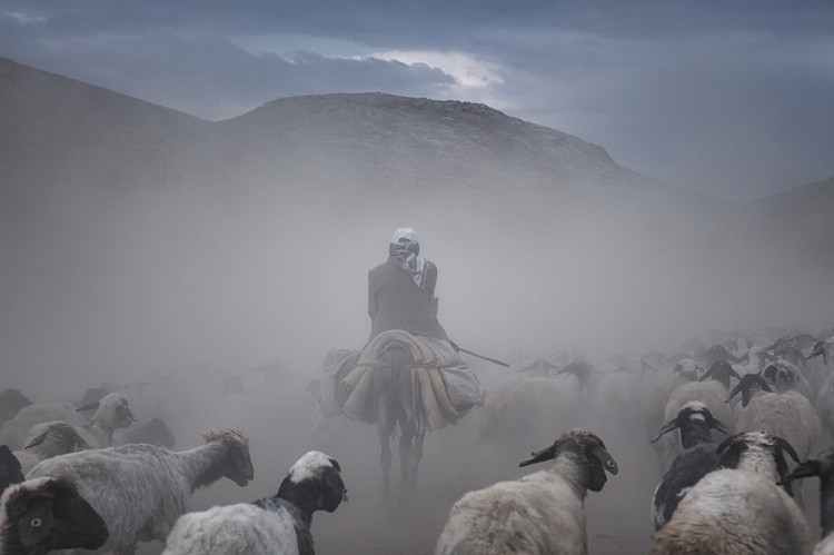 The shepherd and his herd try to move in a dense dust. Van, Turkey. August 2017.