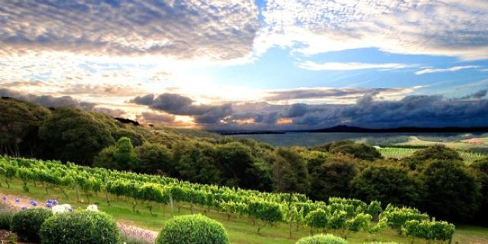 The Rise of Organic Wine in NZ Webinar | 23 Sept 3am NZT | 22 Sept 8am PST, 11am EST, 4pm UK